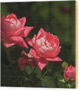 Knockout Roses Wood Print
