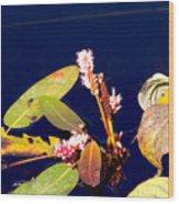 Knotweed On Deep Blue Wood Print
