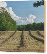 Knox Farm 11625 Wood Print