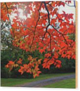 Knox Park 8444 Wood Print by Guy Whiteley