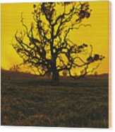 Koa Tree Silhouette Wood Print