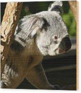 Koala Bear 2 Wood Print