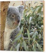 Koala Bear I Wood Print