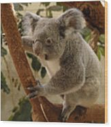 Koala Bear II Wood Print