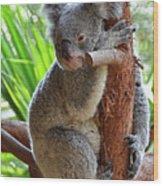 Koala Mama Wood Print
