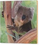 Koala  Painting Wood Print by Michael Greenaway
