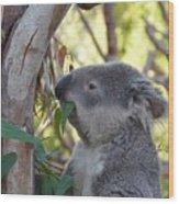 Koala Time Wood Print