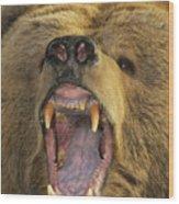 Kodiak Bear Ursus Arctos Middendorffi Wood Print