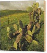Kohala Cactus Wood Print
