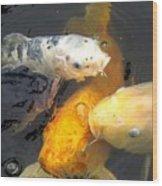 Koi Fish 5 Wood Print
