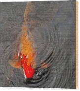 Koi  At Byodo Temple Wood Print
