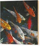 Koi Fish IIi Wood Print