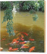 Koi Party Wood Print