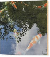 Koi Pond Reflection Wood Print