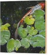 Koi With Lily Pads A Wood Print