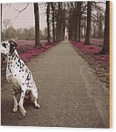 Kokkie On The Autumn Alley Of Rhoon Wood Print