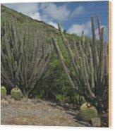 Koko Crater Cacti Wood Print