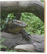 Komodo Dragon Creeping Through Two Fallen Logs Wood Print