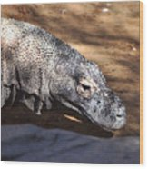 Komodo Kountry Wood Print