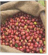 Kona Coffee Bean Harvest Wood Print