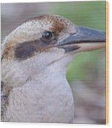 Kookaburra 12 Wood Print