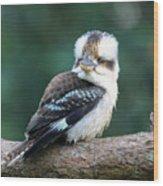 Kookaburra Australian Bird Wood Print