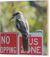 Kookaburra On A Road Sign Wood Print