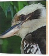 Kookaburra Portrait By Kaye Menner Wood Print