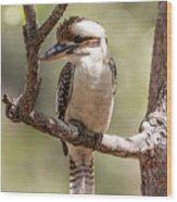 Kookaburra Sits In The Ol Gum Tree Wood Print