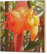 Koolau Flower Hawaii Wood Print