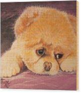 Flying Lamb Productions     Koty The Puppy Wood Print