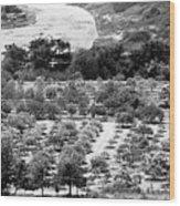 Kourion Farm Wood Print
