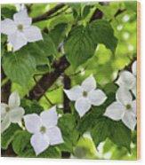 Kousa Dogwood In Bloom Wood Print