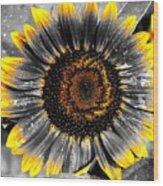 Krypton's Sun Flower Bwy Wood Print