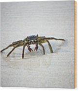 Kua Bay Crab 1 Wood Print