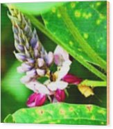 Kudzoo Flower Wood Print