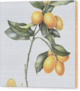 Kumquat Wood Print by Margaret Ann Eden