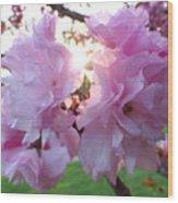 Kwanzan Cherry Blossoms Wood Print