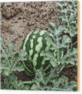 Ky Watermelon Wood Print