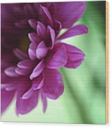 La Fleur De L' Amour Wood Print