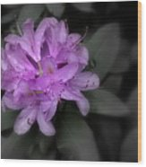 La Fleur Pourpre Wood Print