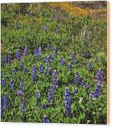 La Jolla Canyon Lupines Wood Print
