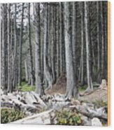 La Push Beach Trees Wood Print