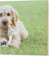 Labradoodle Puppy In Grass Wood Print