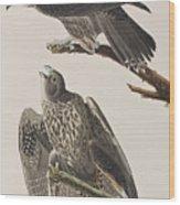 Labrador Falcon Wood Print
