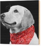 Labrador In Black And White  Wood Print
