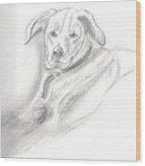 Labrador Retreiver Wood Print