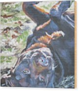 Labrador Retriever Chocolate Fun Wood Print