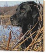 Labrador Retriever Waiting In Blind Wood Print