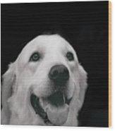 Labrador Smiling B W Wood Print